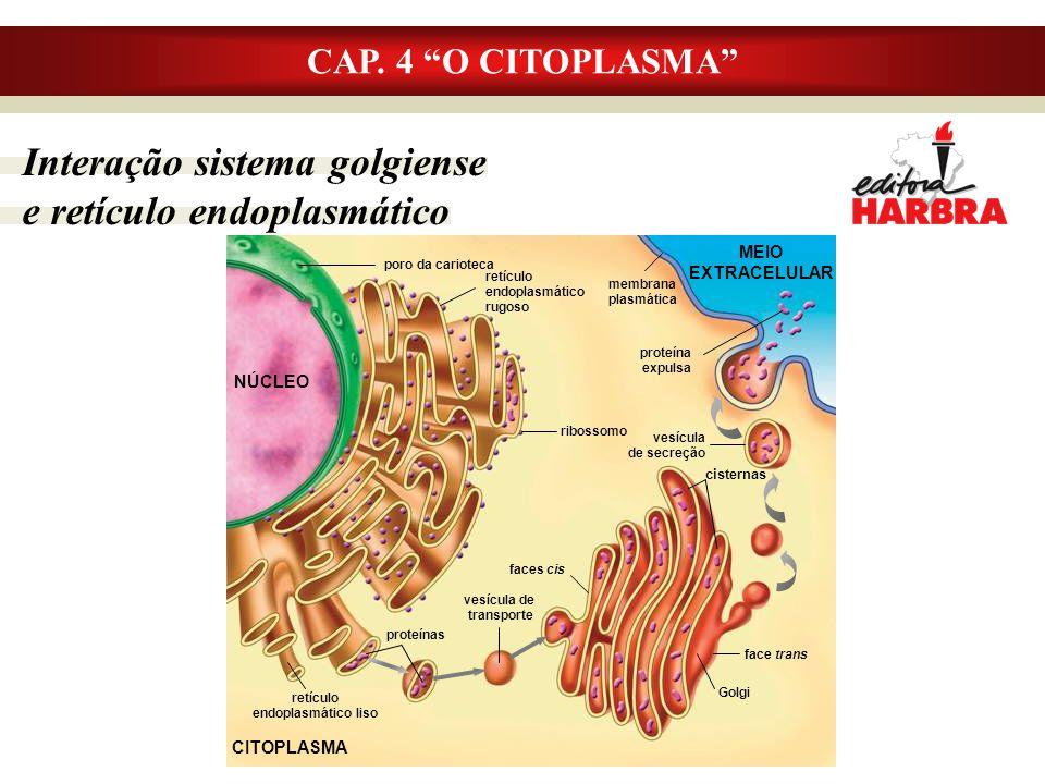 Interação sistema golgiense e retículo endoplasmático