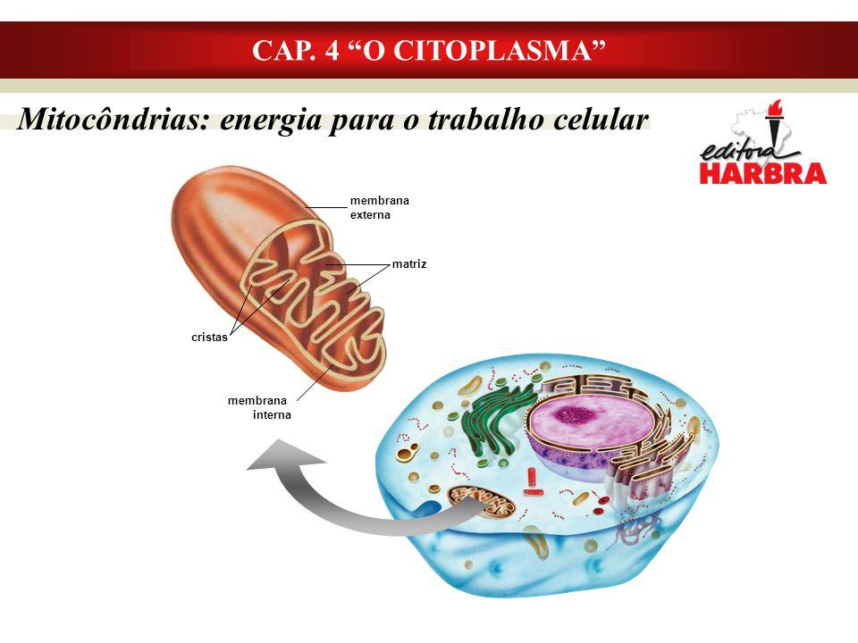 Mitocôndrias: energia para o trabalho celular
