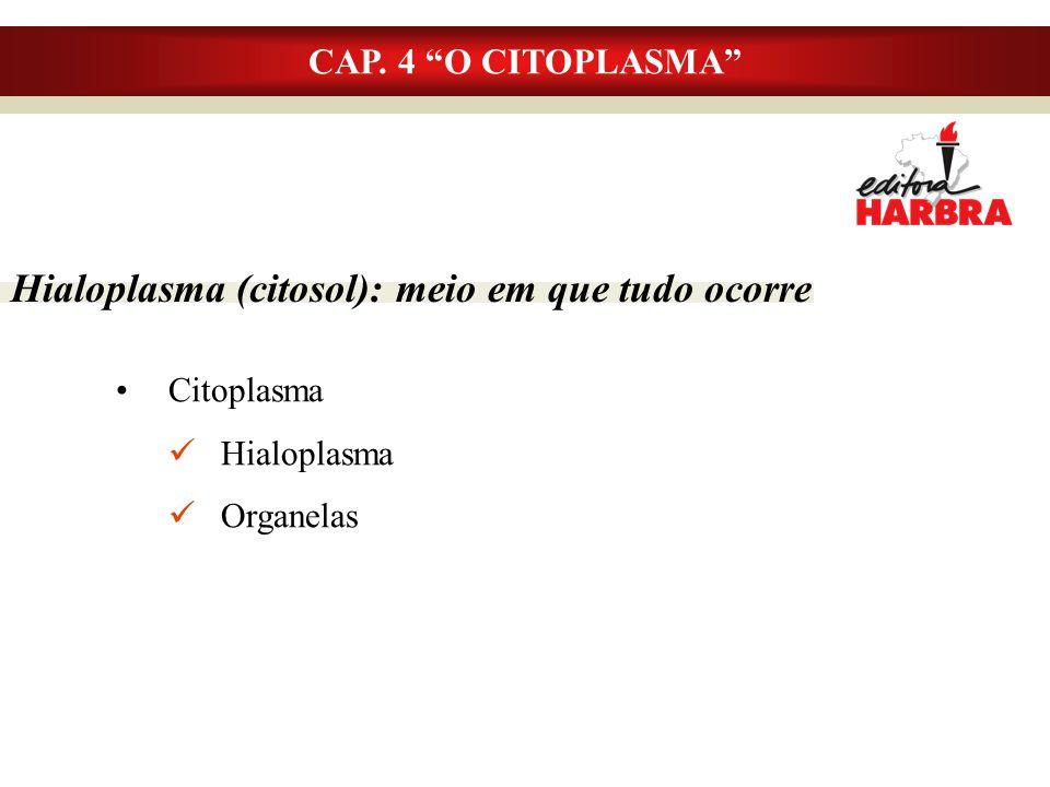 Hialoplasma (citosol): meio em que tudo ocorre