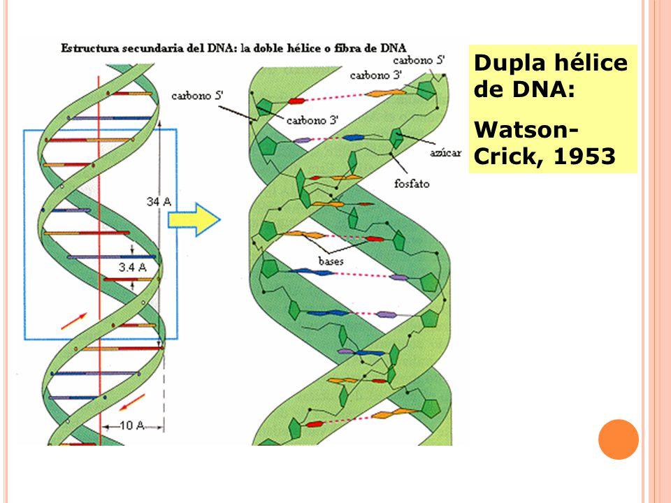 Dupla hélice de DNA: Watson-Crick, 1953