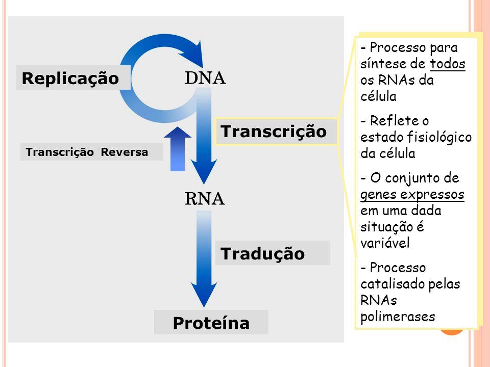 Replicação Transcrição Tradução Proteína
