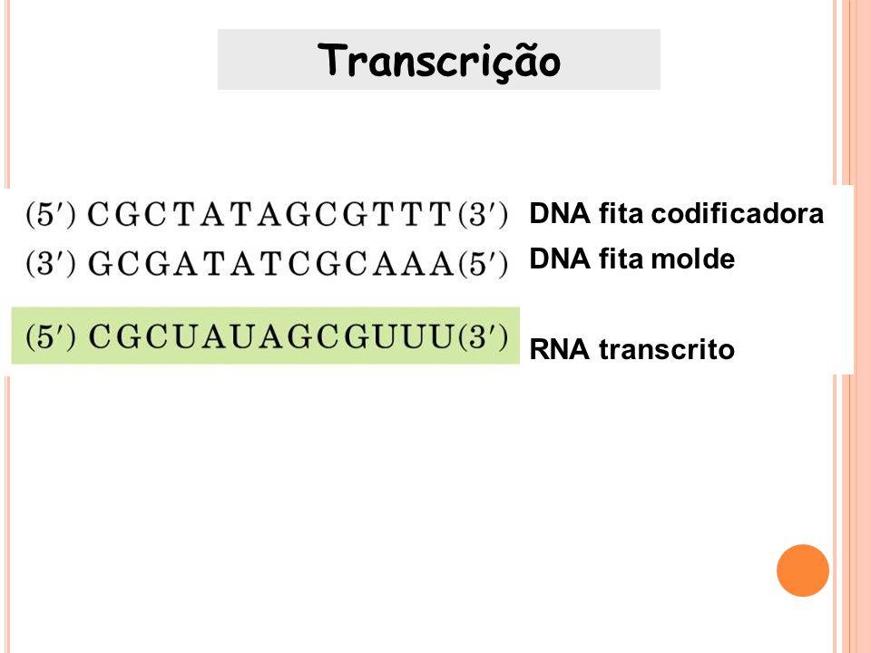 Transcrição DNA fita codificadora DNA fita molde RNA transcrito