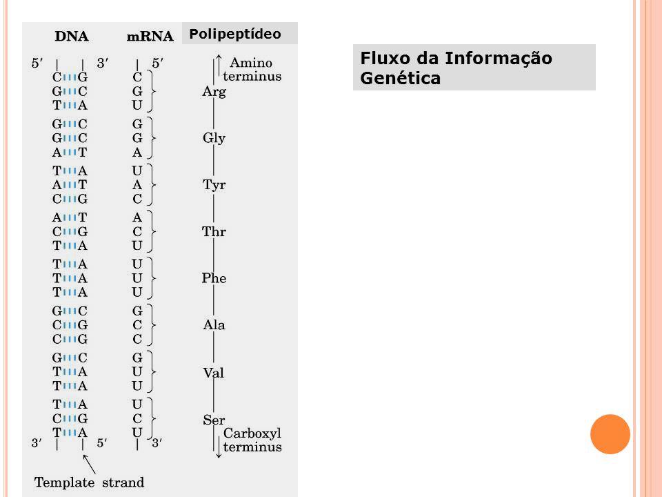 Fluxo da Informação Genética