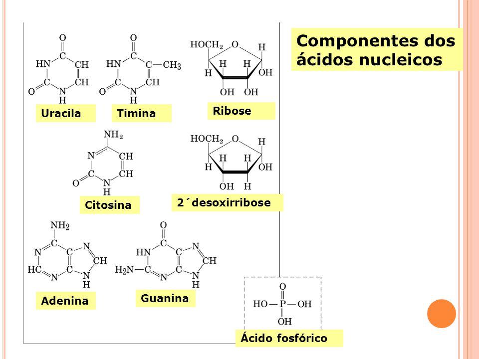 Componentes dos ácidos nucleicos