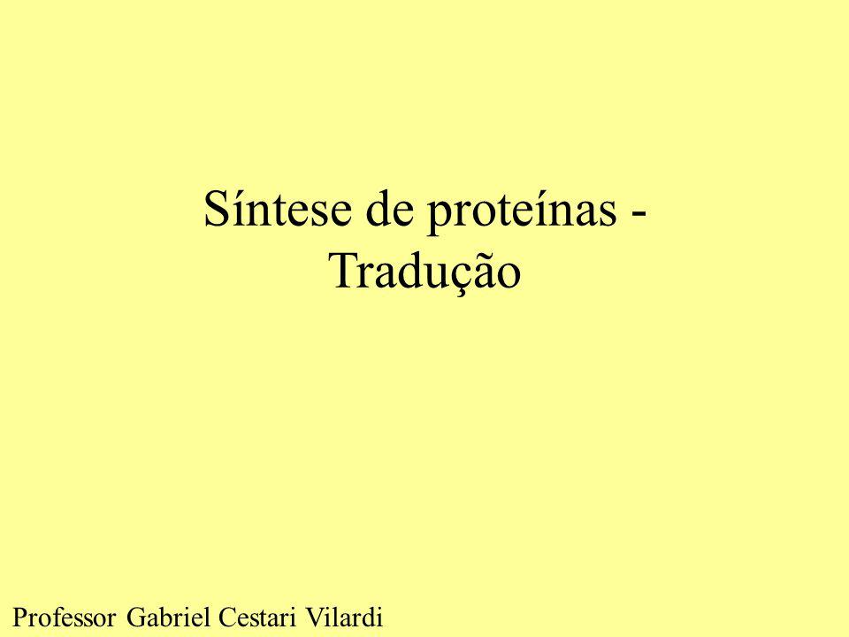 Síntese de proteínas - Tradução Professor Gabriel Cestari Vilardi