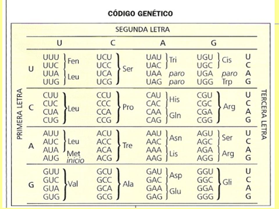 Tradução Código genético O código genético é universal: