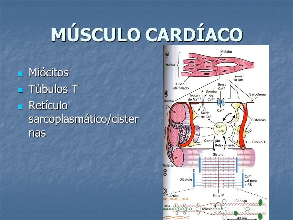 MÚSCULO CARDÍACO Miócitos Túbulos T Retículo sarcoplasmático/cisternas