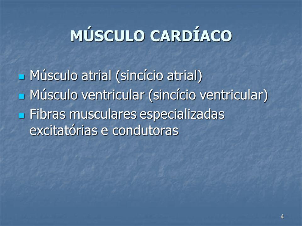 MÚSCULO CARDÍACO Músculo atrial (sincício atrial)