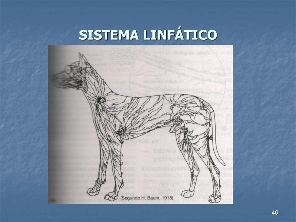 SISTEMA LINFÁTICO 40