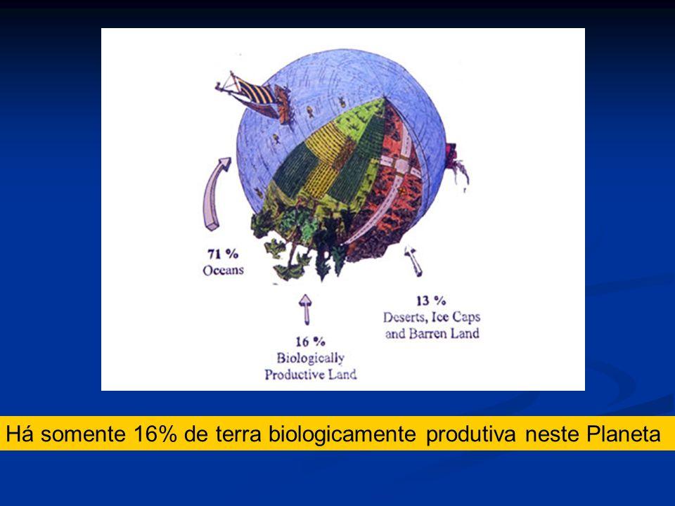 Há somente 16% de terra biologicamente produtiva neste Planeta