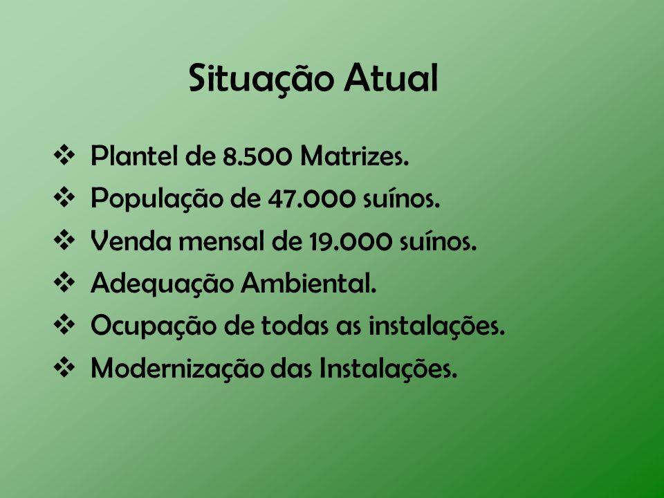 Situação Atual Plantel de 8.500 Matrizes. População de 47.000 suínos.