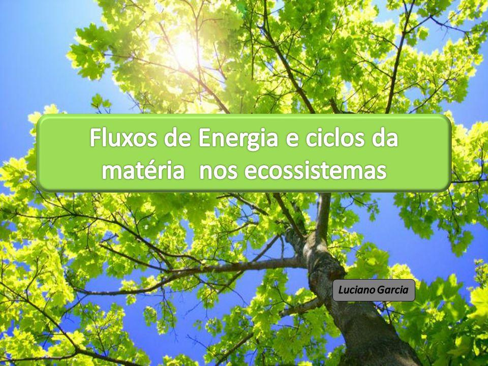 Fluxos de Energia e ciclos da matéria nos ecossistemas