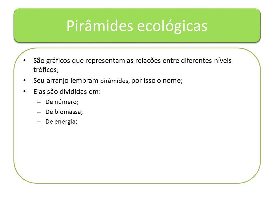 Pirâmides ecológicas São gráficos que representam as relações entre diferentes níveis tróficos; Seu arranjo lembram pirâmides, por isso o nome;