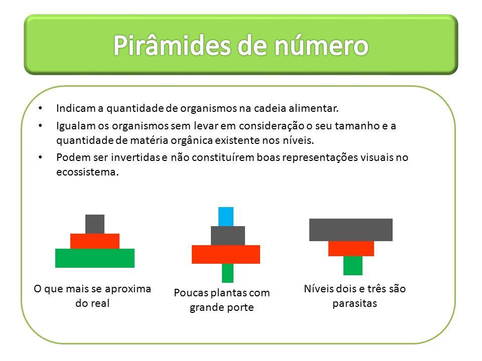 Pirâmides de número Indicam a quantidade de organismos na cadeia alimentar.