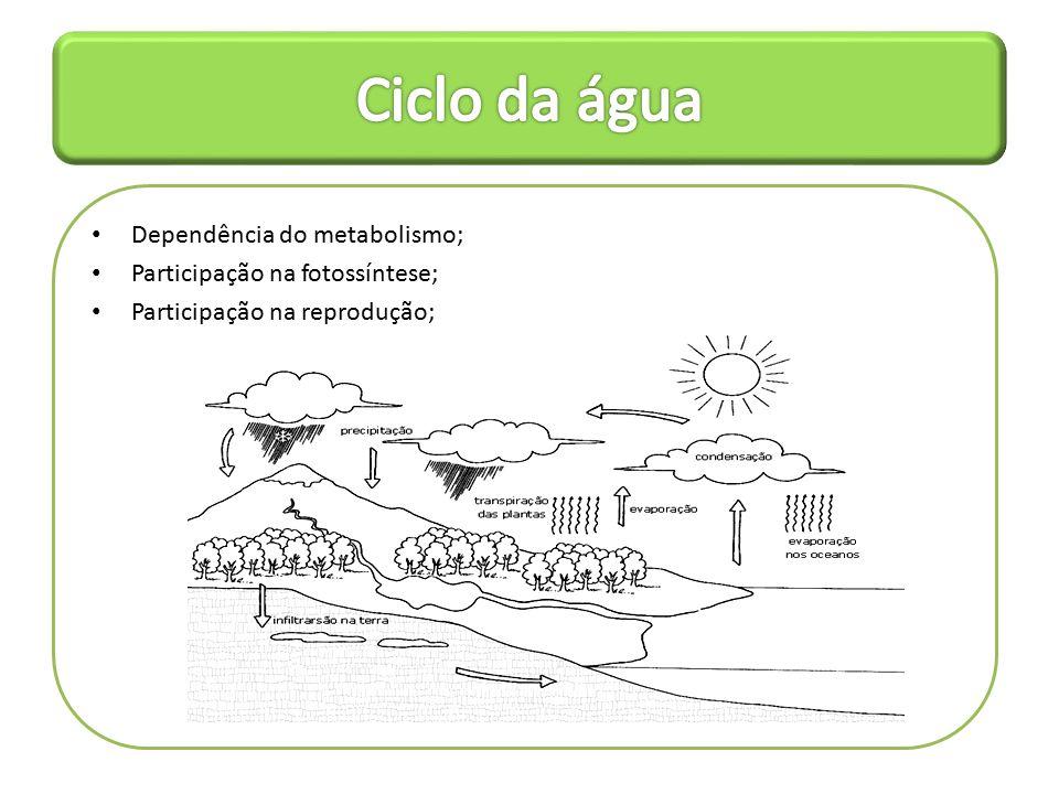 Ciclo da água Dependência do metabolismo;