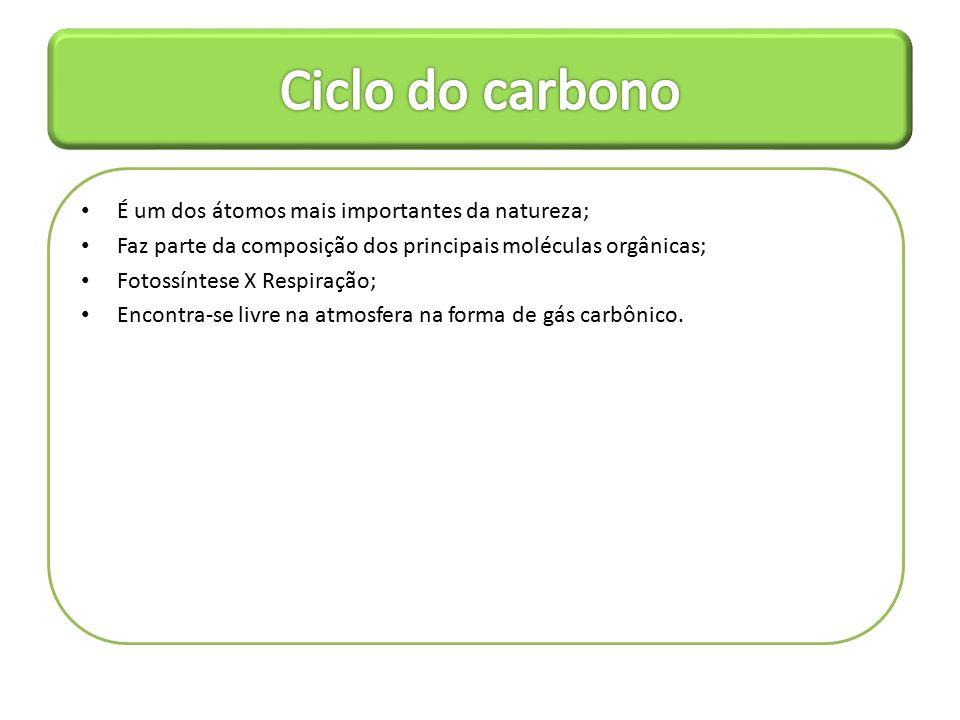 Ciclo do carbono É um dos átomos mais importantes da natureza;