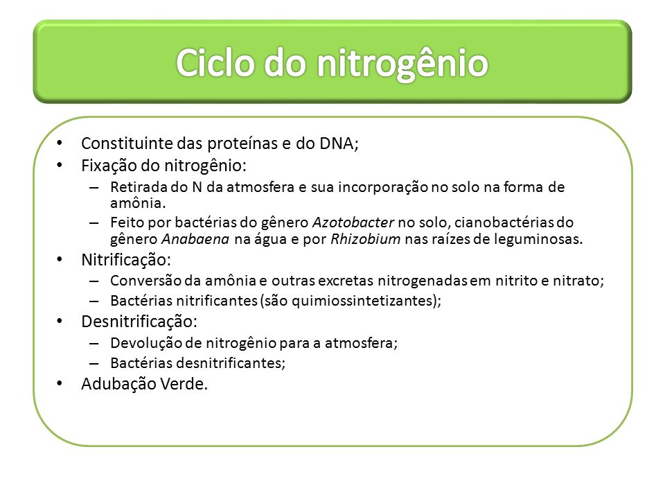 Ciclo do nitrogênio Constituinte das proteínas e do DNA;