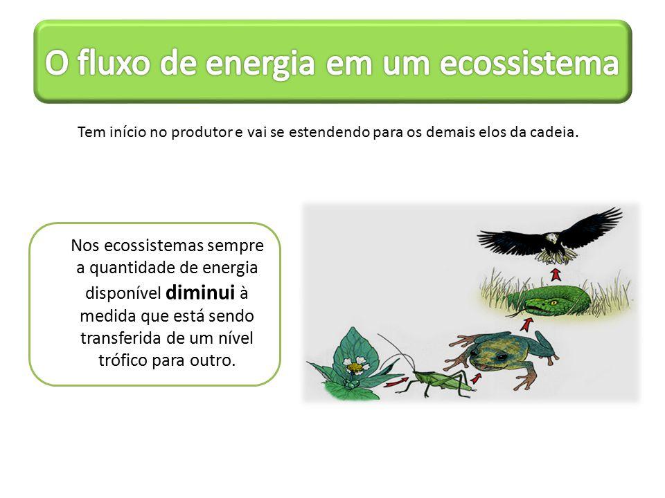 O fluxo de energia em um ecossistema