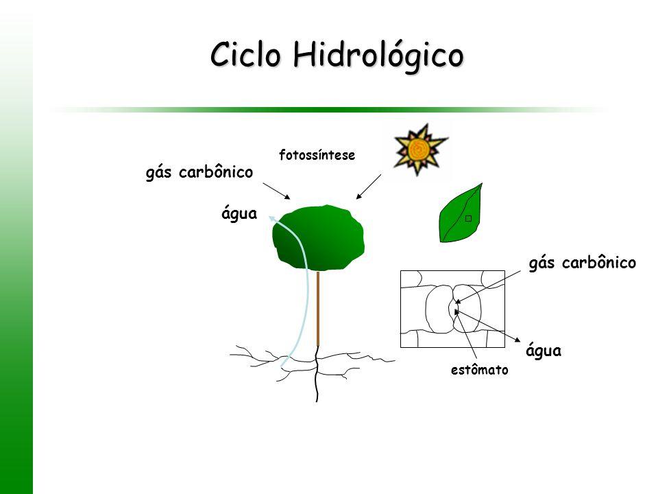 Ciclo Hidrológico gás carbônico água gás carbônico água fotossíntese