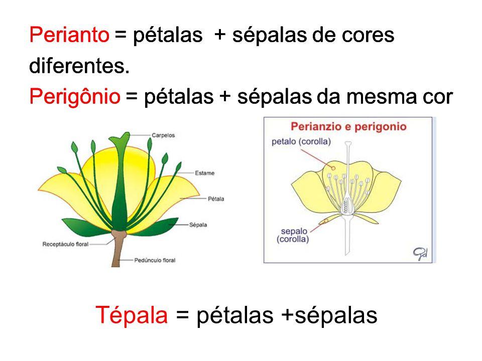Tépala = pétalas +sépalas