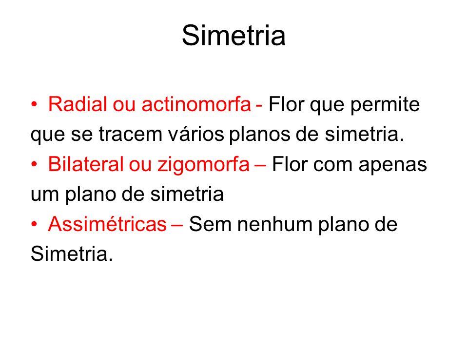Simetria Radial ou actinomorfa - Flor que permite