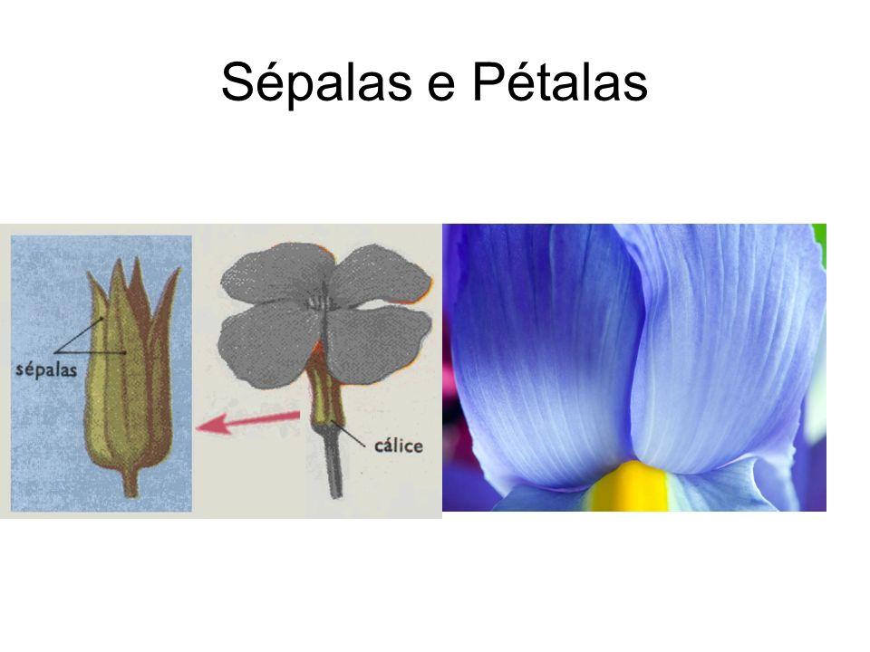 Sépalas e Pétalas