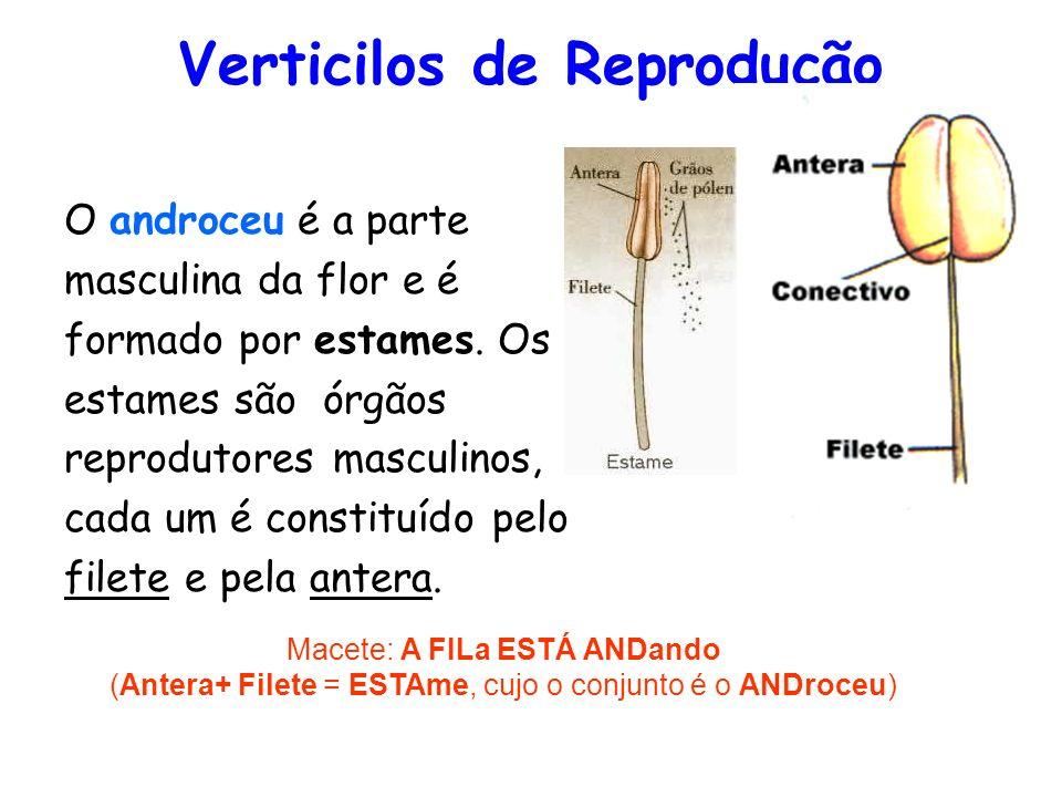 Verticilos de Reprodução