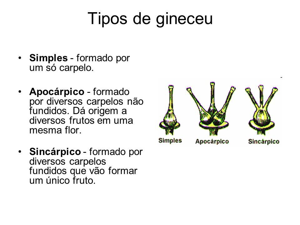 Tipos de gineceu Simples - formado por um só carpelo.