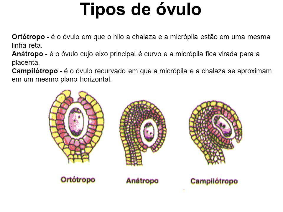 Tipos de óvulo