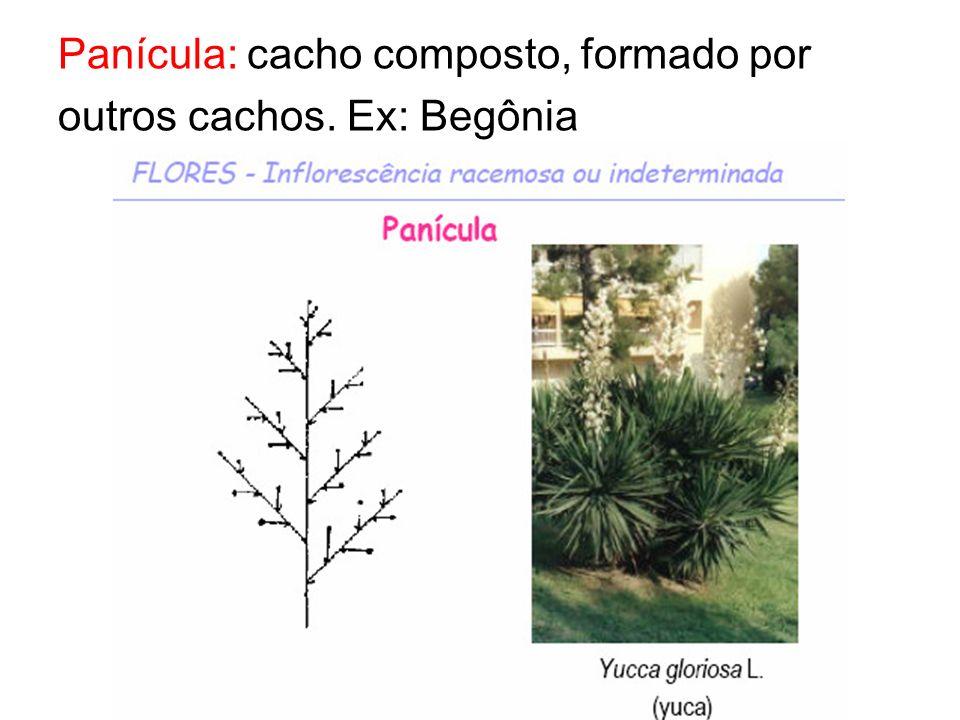 Panícula: cacho composto, formado por outros cachos. Ex: Begônia