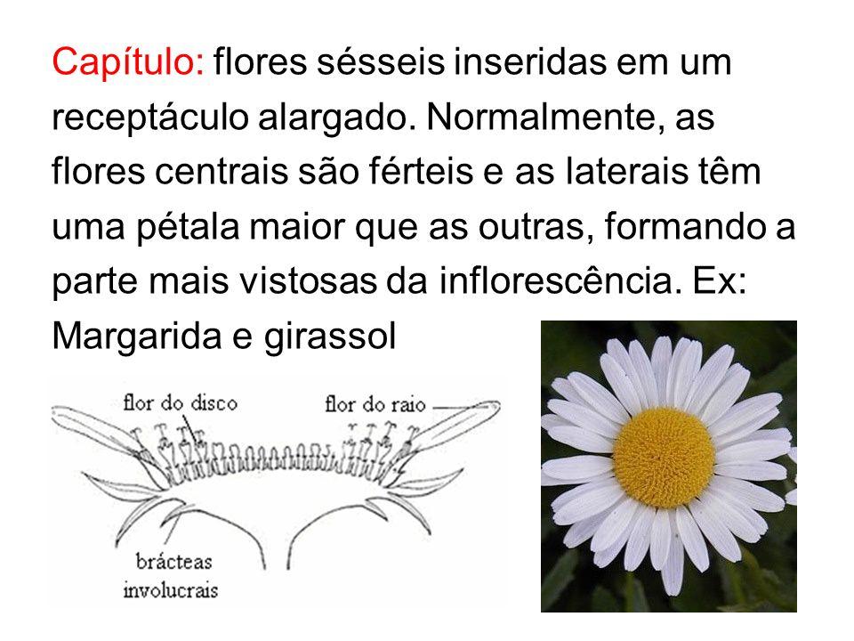 Capítulo: flores sésseis inseridas em um receptáculo alargado