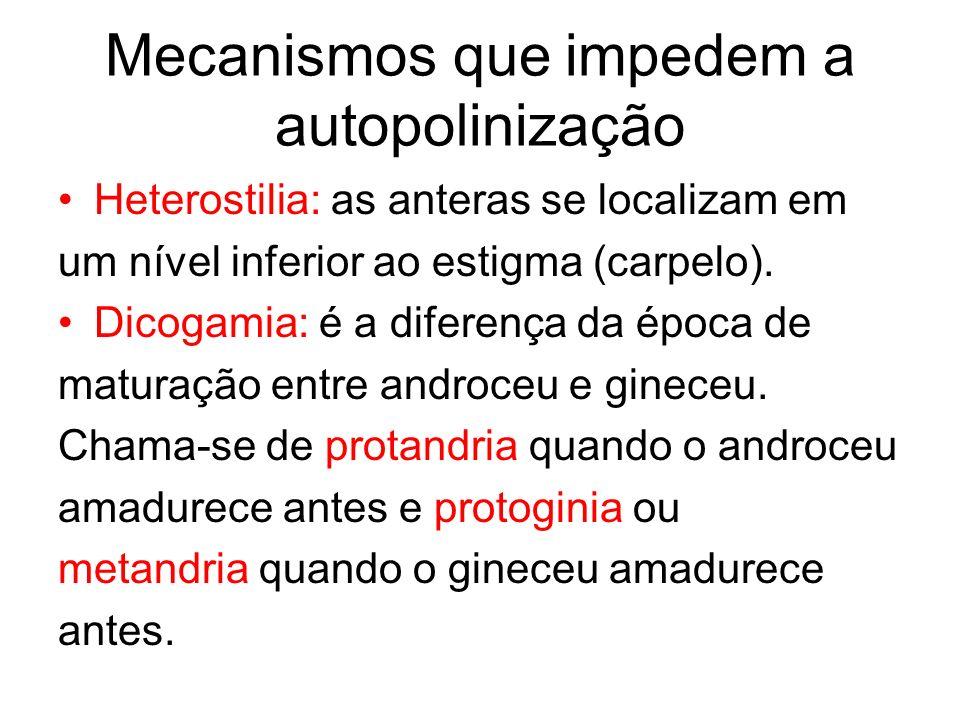 Mecanismos que impedem a autopolinização