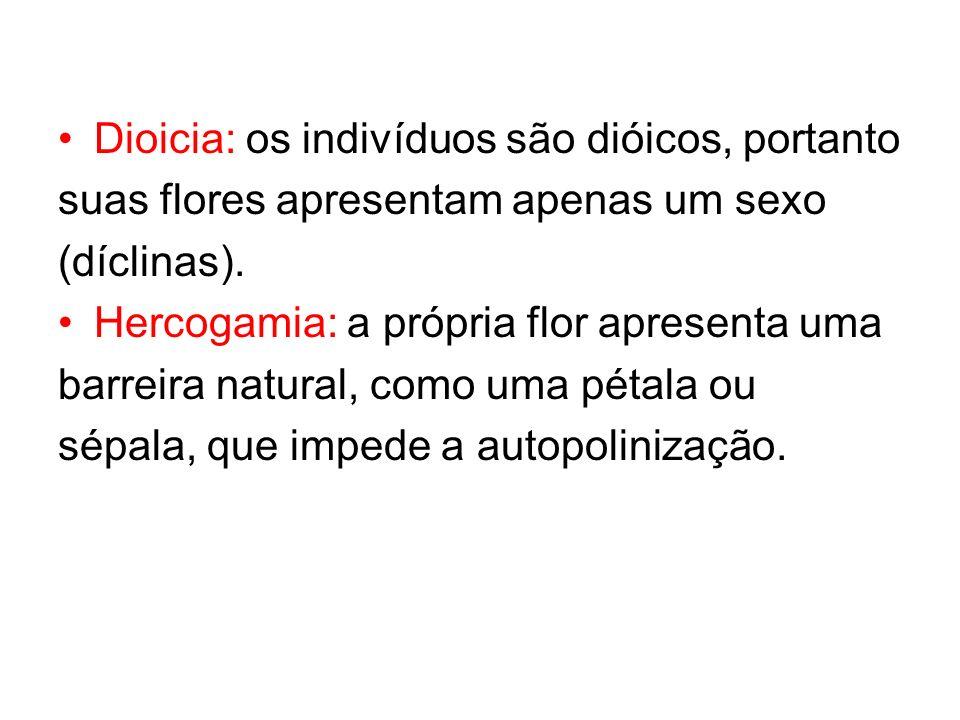 Dioicia: os indivíduos são dióicos, portanto