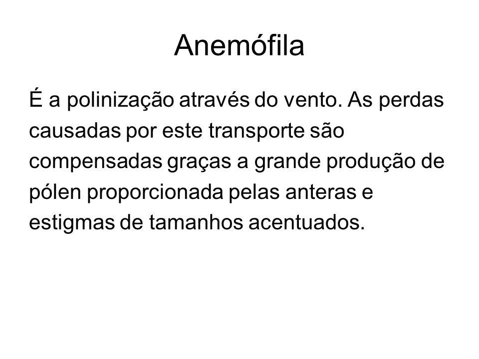 Anemófila É a polinização através do vento. As perdas