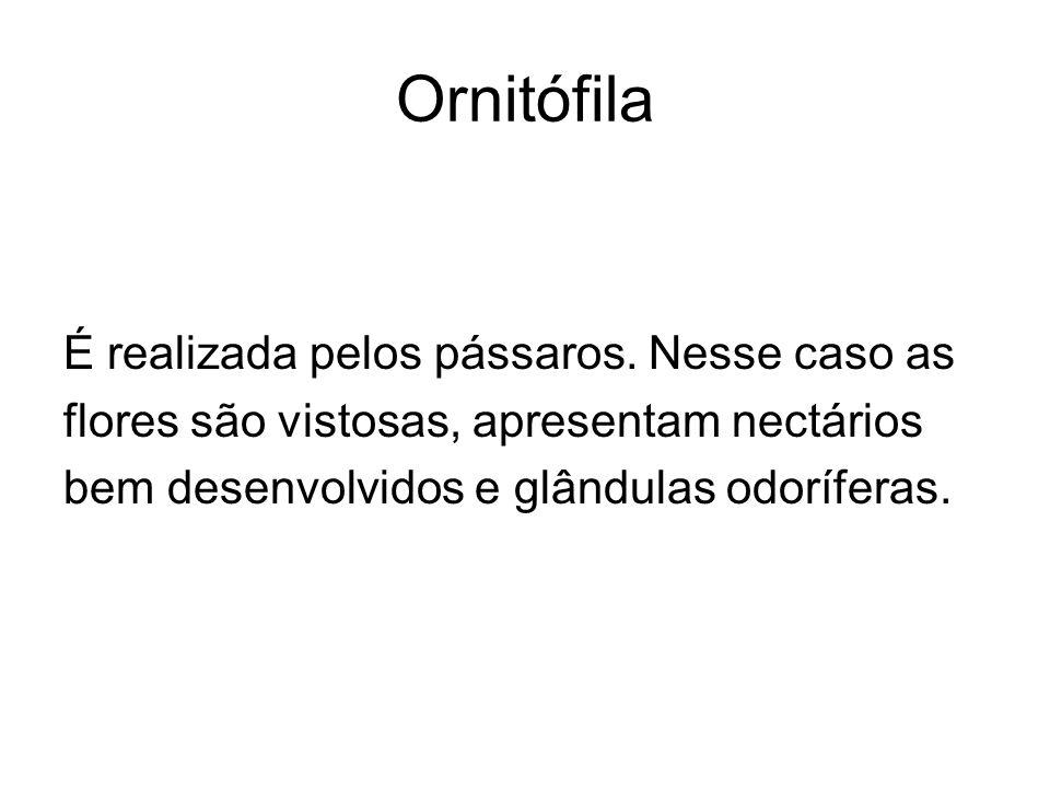 Ornitófila É realizada pelos pássaros. Nesse caso as