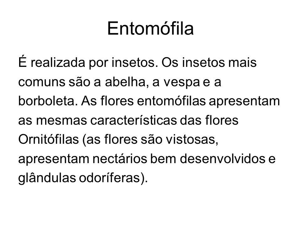 Entomófila É realizada por insetos. Os insetos mais