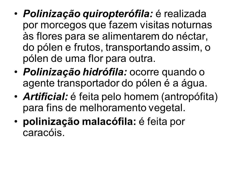 Polinização quiropterófila: é realizada por morcegos que fazem visitas noturnas às flores para se alimentarem do néctar, do pólen e frutos, transportando assim, o pólen de uma flor para outra.
