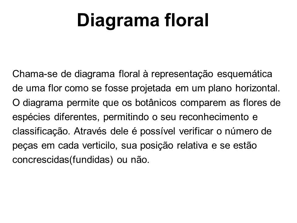Diagrama floral