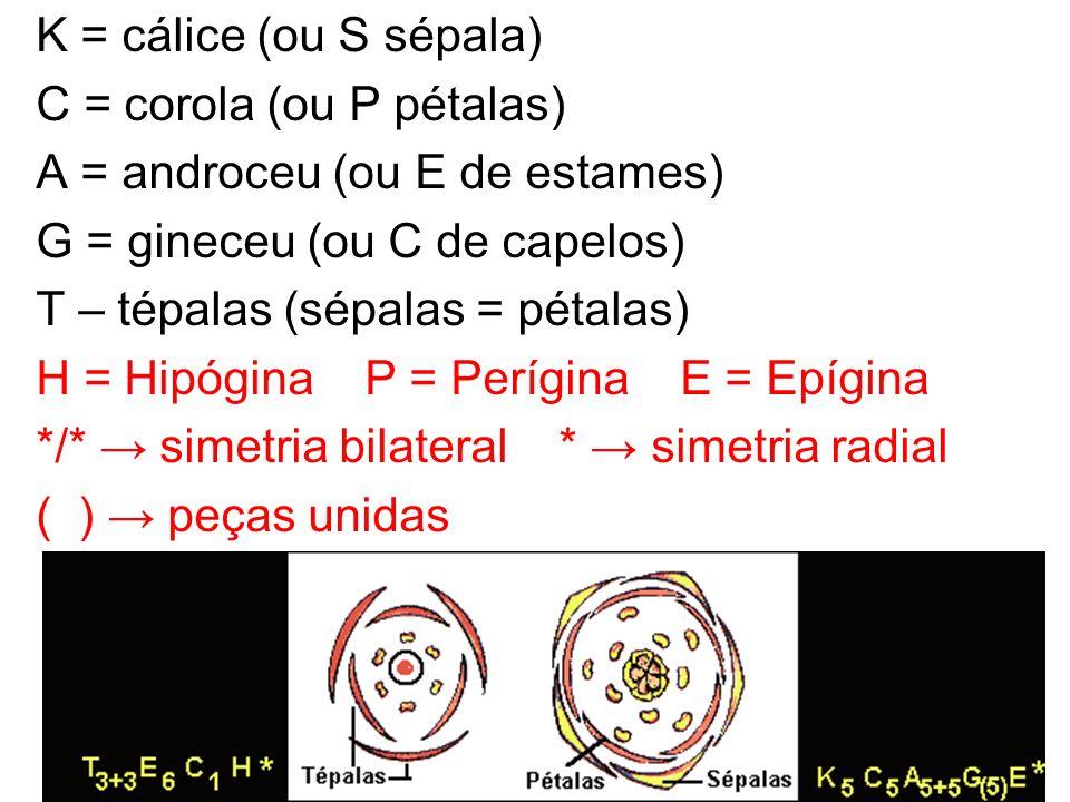 K = cálice (ou S sépala) C = corola (ou P pétalas) A = androceu (ou E de estames) G = gineceu (ou C de capelos) T – tépalas (sépalas = pétalas) H = Hipógina P = Perígina E = Epígina */* → simetria bilateral * → simetria radial ( ) → peças unidas