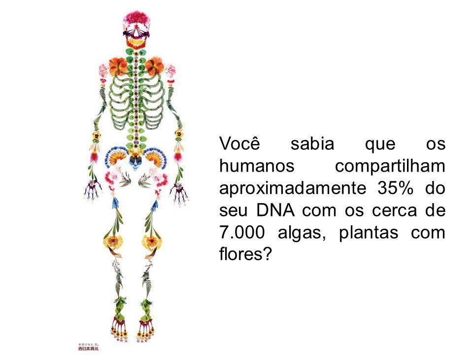 Você sabia que os humanos compartilham aproximadamente 35% do seu DNA com os cerca de 7.000 algas, plantas com flores