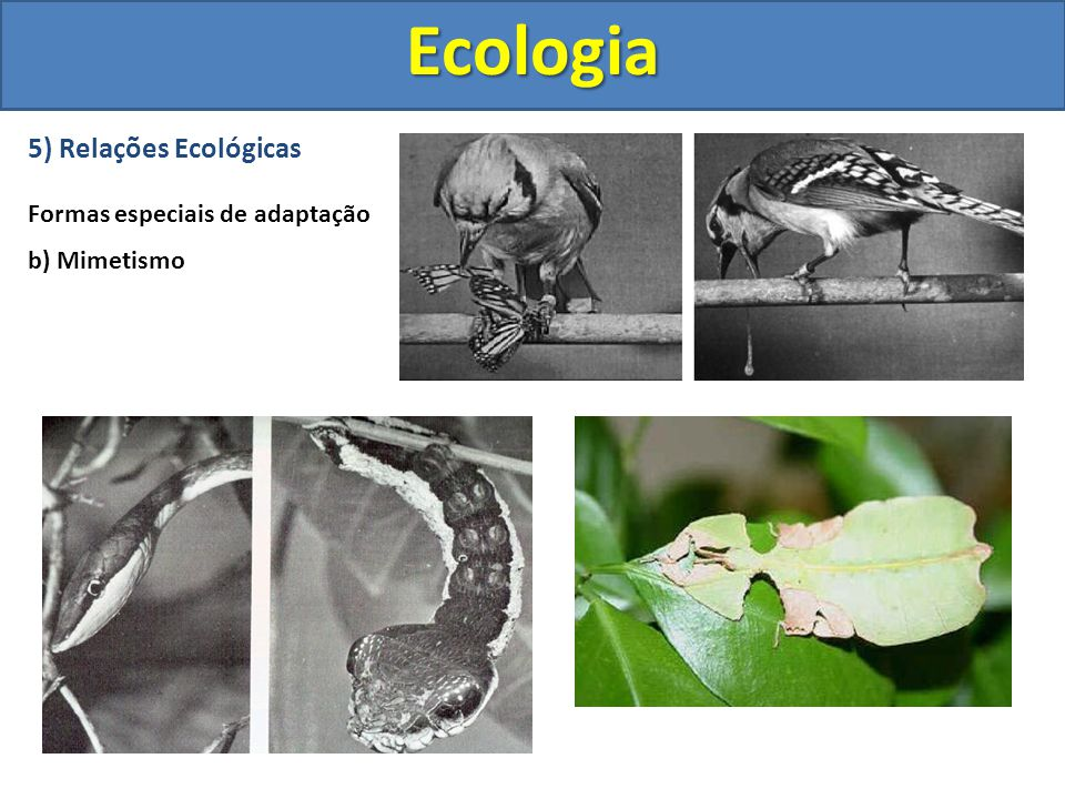 Ecologia 5) Relações Ecológicas Formas especiais de adaptação