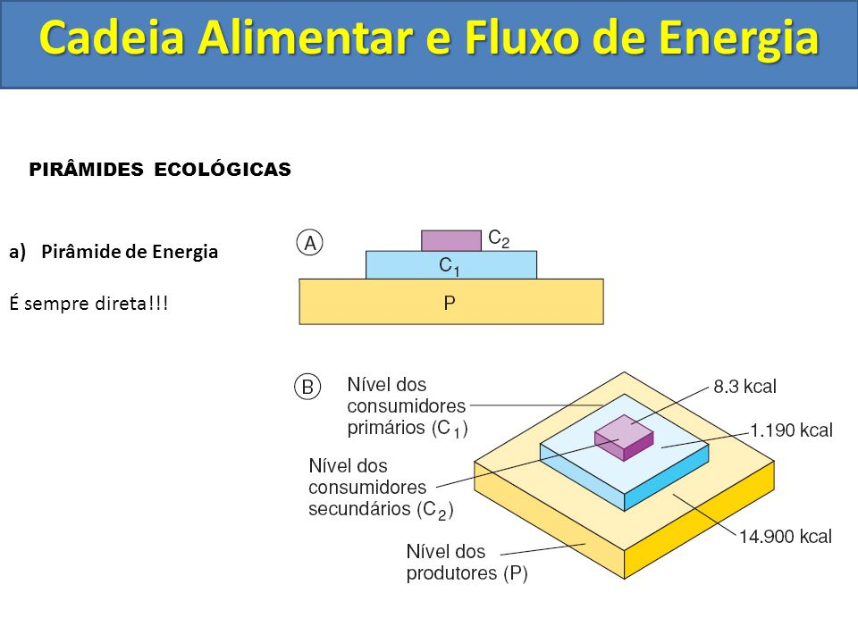 Cadeia Alimentar e Fluxo de Energia