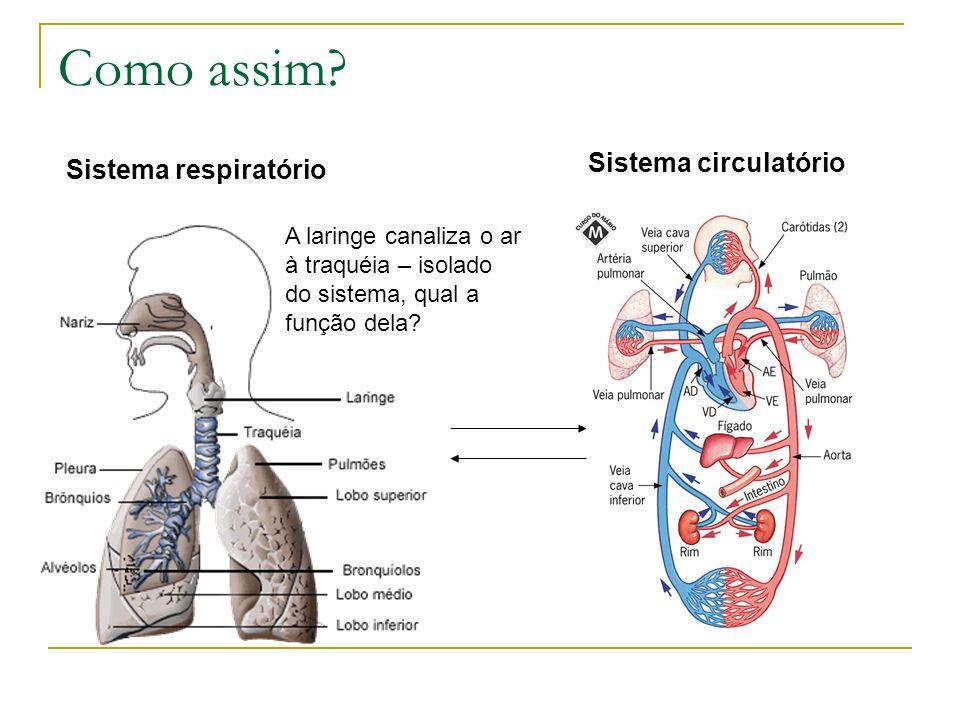 Como assim Sistema circulatório Sistema respiratório