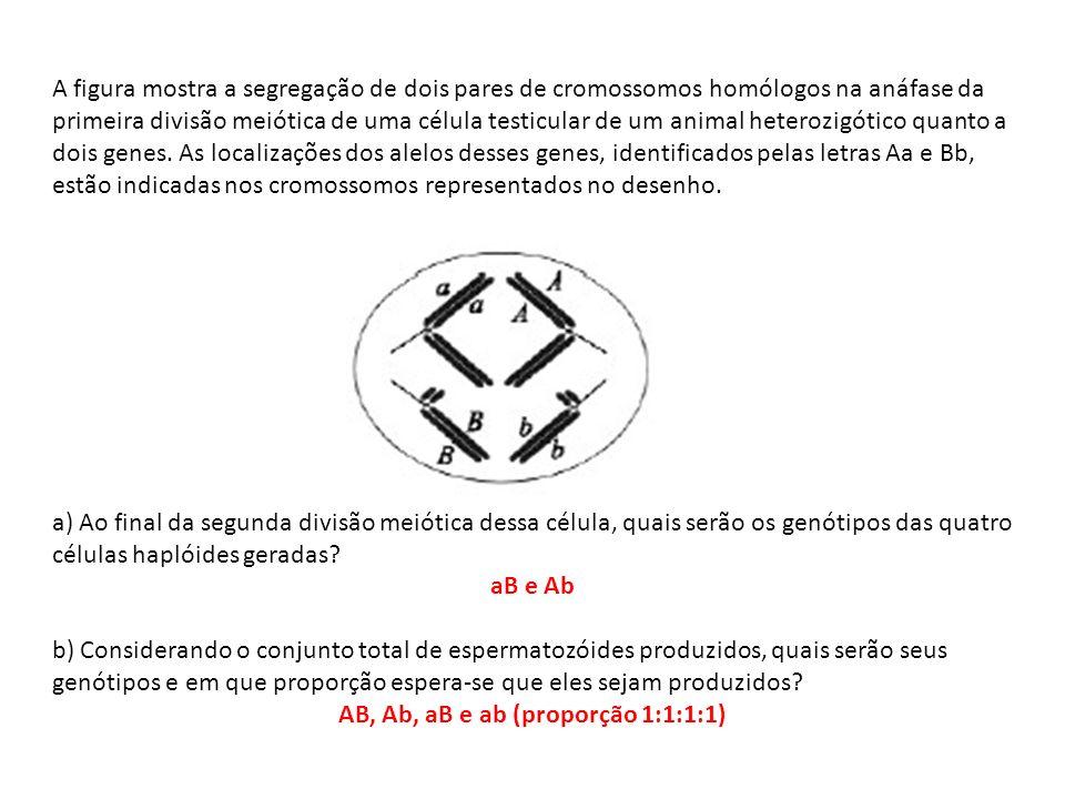 AB, Ab, aB e ab (proporção 1:1:1:1)