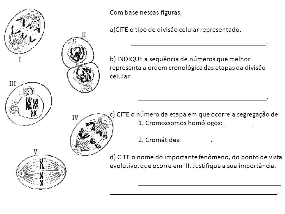 Com base nessas figuras, CITE o tipo de divisão celular representado.