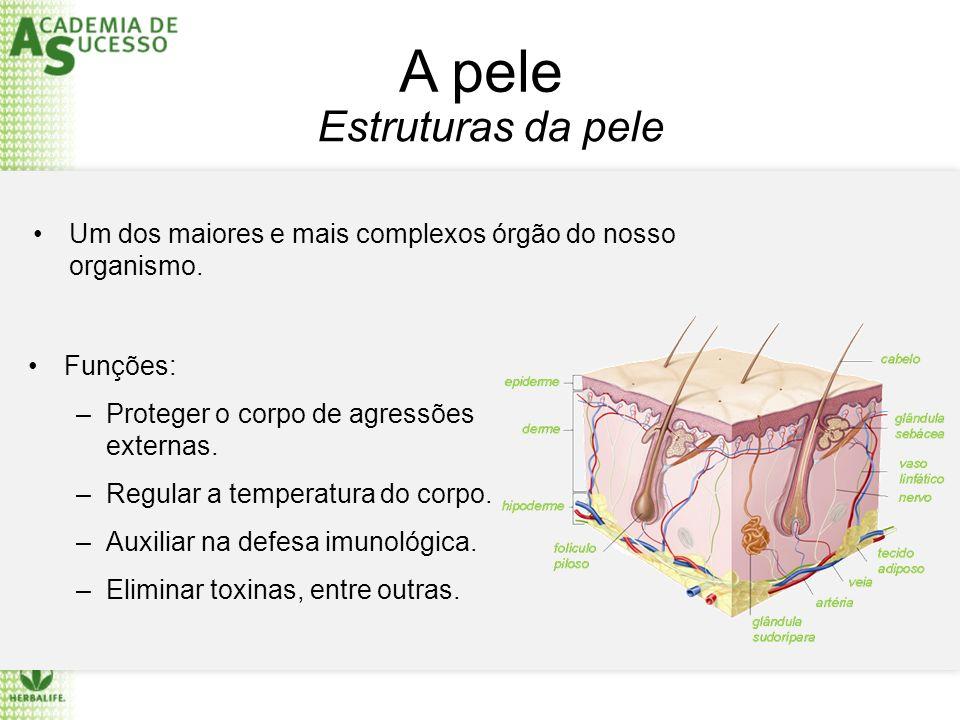 A pele Estruturas da pele