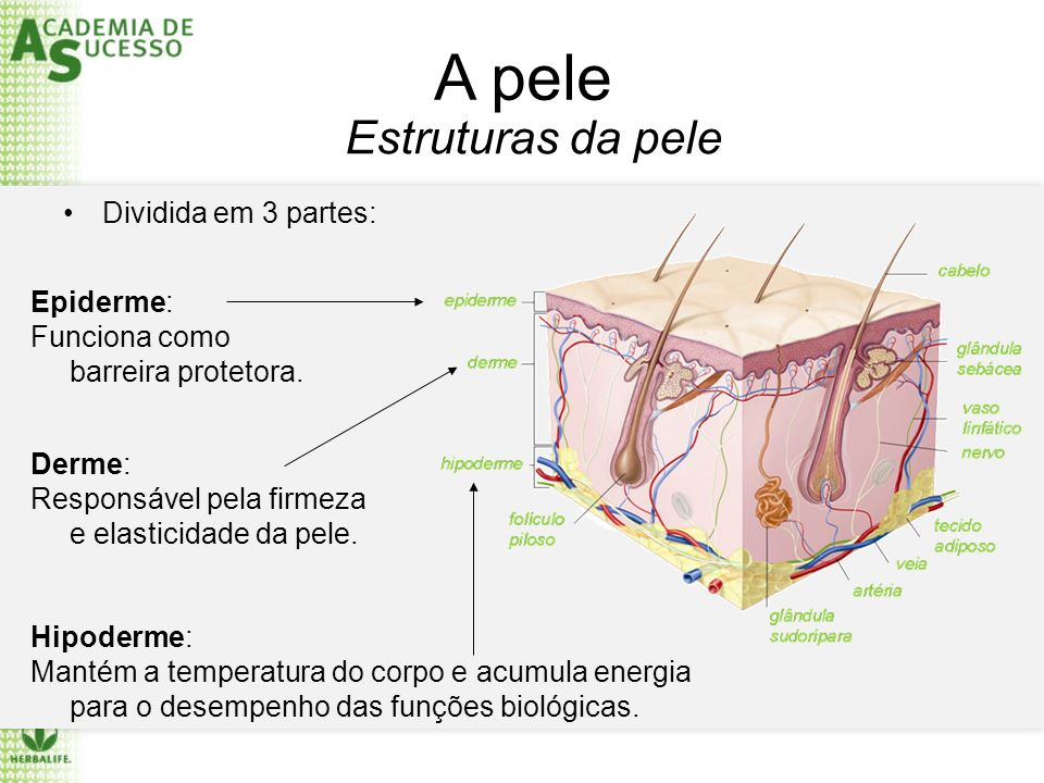 A pele Estruturas da pele Dividida em 3 partes: Epiderme: