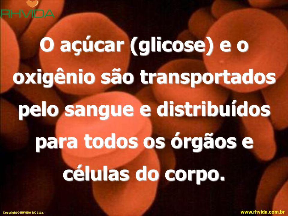 O açúcar (glicose) e o oxigênio são transportados pelo sangue e distribuídos para todos os órgãos e células do corpo.
