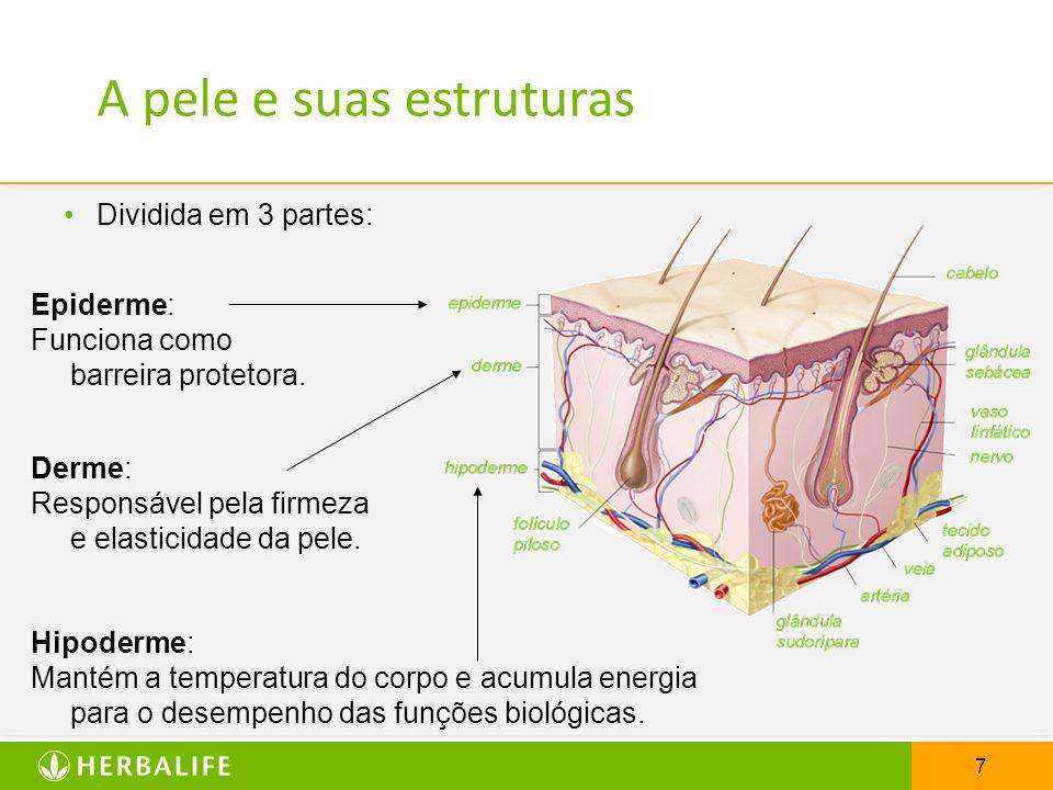 A pele e suas estruturas