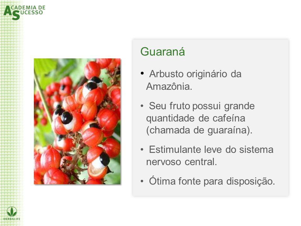 Arbusto originário da Amazônia.